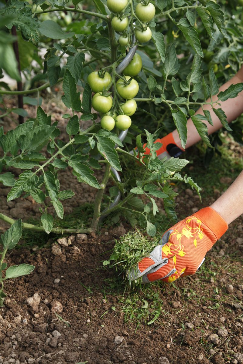mit rasenschnitt die beete mulchen richtig pflanzen pinterest. Black Bedroom Furniture Sets. Home Design Ideas