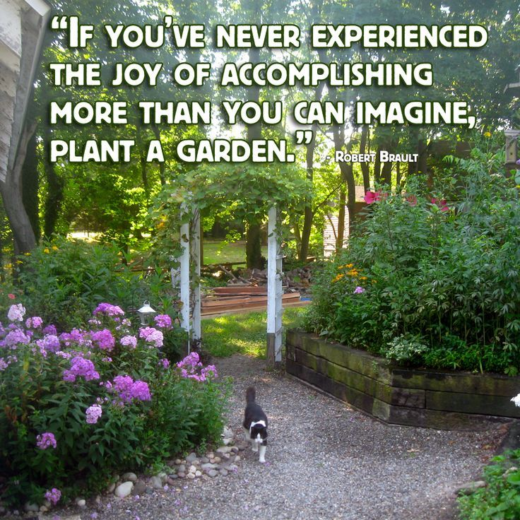 Pin By Rebbecca Landry On Gardening Quotes Quips Pretty Pics