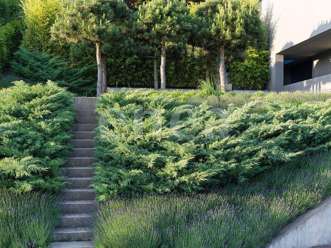 Enea gmbhgarten privat herrliberg enea gmbh garten for Pflanzengestaltung garten