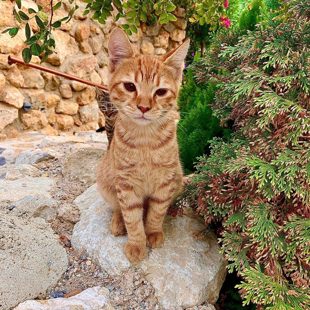 My little Turkish mate  #Cat #Ginger #Kitten #Turkey #Holidays #gingerkitten My little Turkish mate  #Cat #Ginger #Kitten #Turkey #Holidays #gingerkitten My little Turkish mate  #Cat #Ginger #Kitten #Turkey #Holidays #gingerkitten My little Turkish mate  #Cat #Ginger #Kitten #Turkey #Holidays #gingerkitten