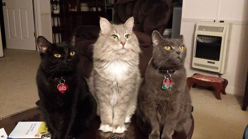 Synchronized Cats courtesy of Tina Hines Johnson