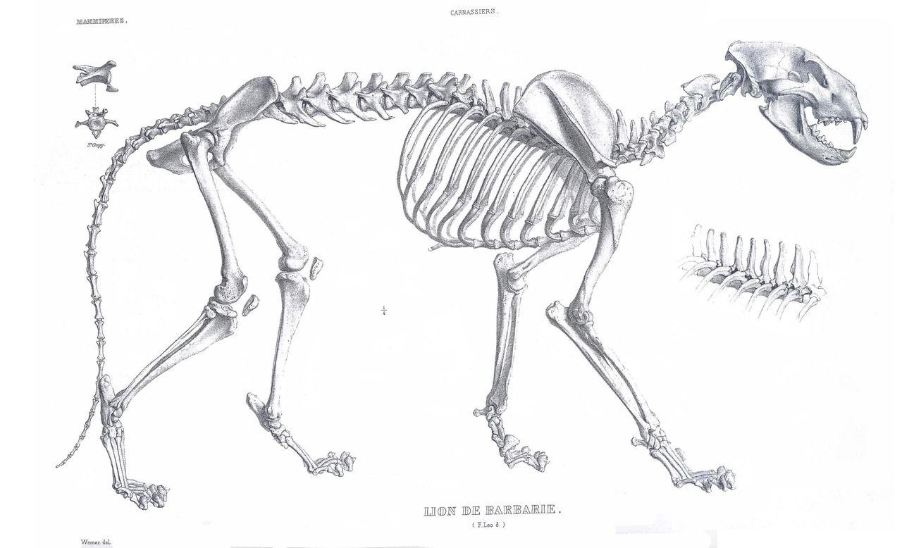 Pin By Elliot Rosenstein On Anatomy