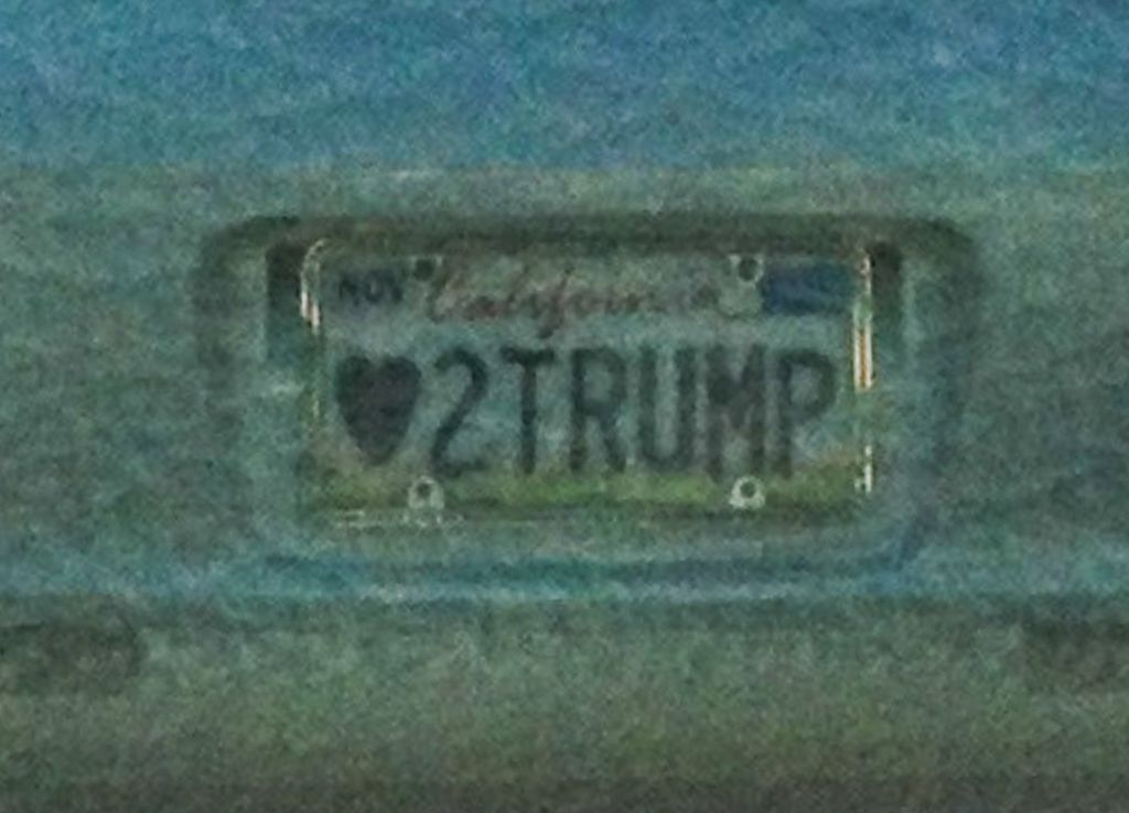 Love to Trump   by G.Chamberlain