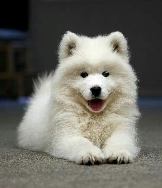 Image result for happy fluffy dog