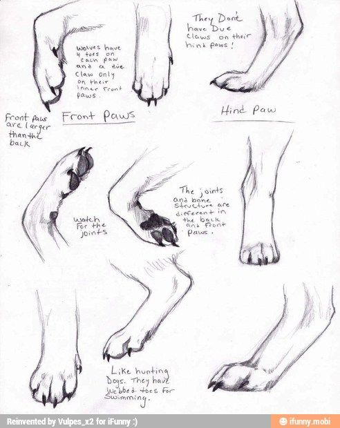 Dog wolf fox paw drawing