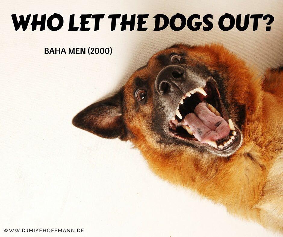 Ohrwurmgefahr 😍🎶 Wer kennt den Song noch? 🔊🎉 #bahamen #dogs #weddingdj