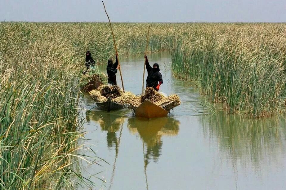 Iraqi Marshes, Southern Iraq أهوار العراق