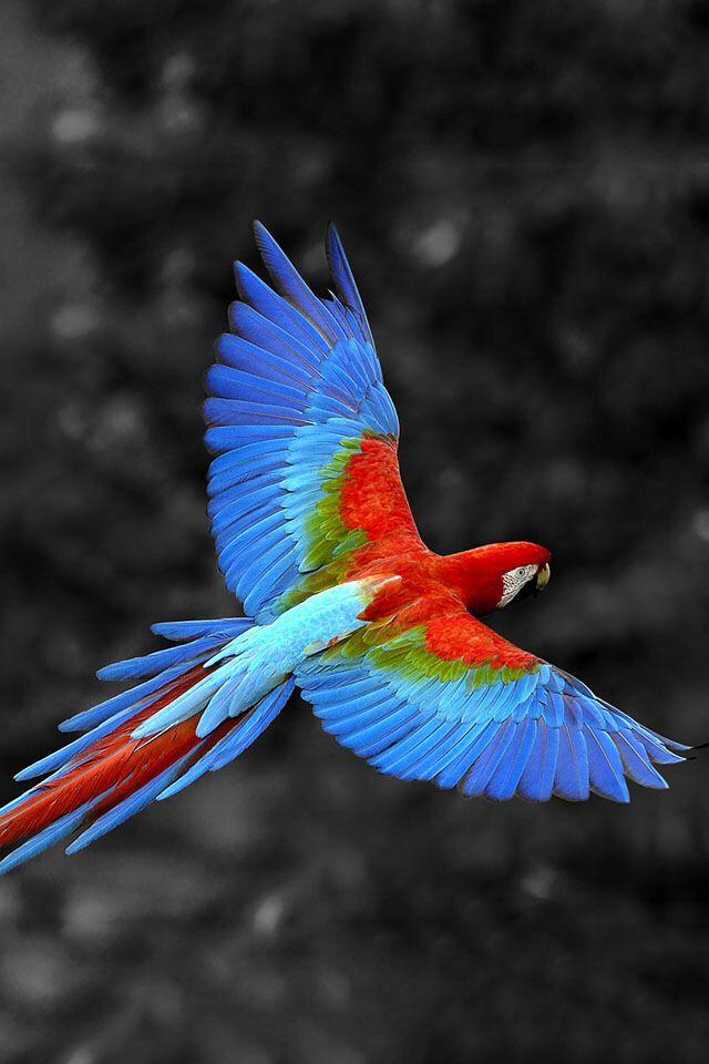 Pin Af Adipati Julian Pa Billeder Fugle Papegoje Dyr