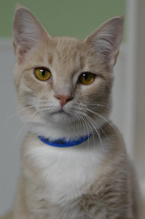 Furkids Rescues Hundreds Of Homeless Cats Each Year Including Many Kittens That Are In Need Of Caring Lifelong Kittens Pretty Cats Beautiful Cats