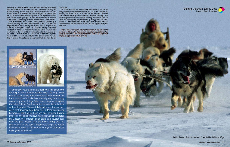 THE CANADIAN ESKIMO DOG IS BATTLING EXTINCTION::Mushing.com - The ...