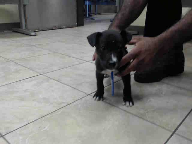 Dies Tues 06 06 17 Needs An Adoption Hold By 5 30pm Or A Rescue Group To Claim By 5 50pm Tuesday 6 6 Local Foster Needed Houston Dogs Dog Id Animals