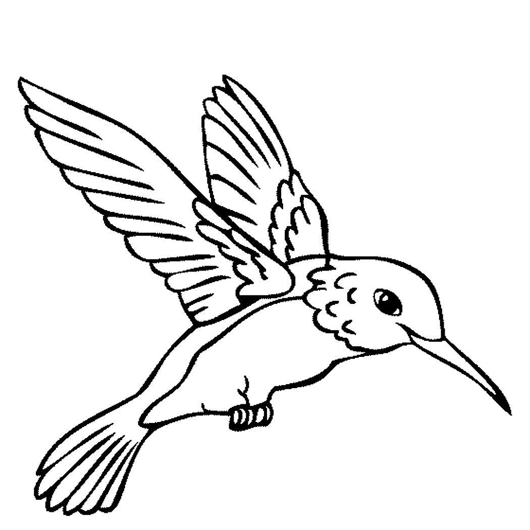 Hummingbird Coloring Pages Bird Outline Hummingbird Drawing Bird Drawings