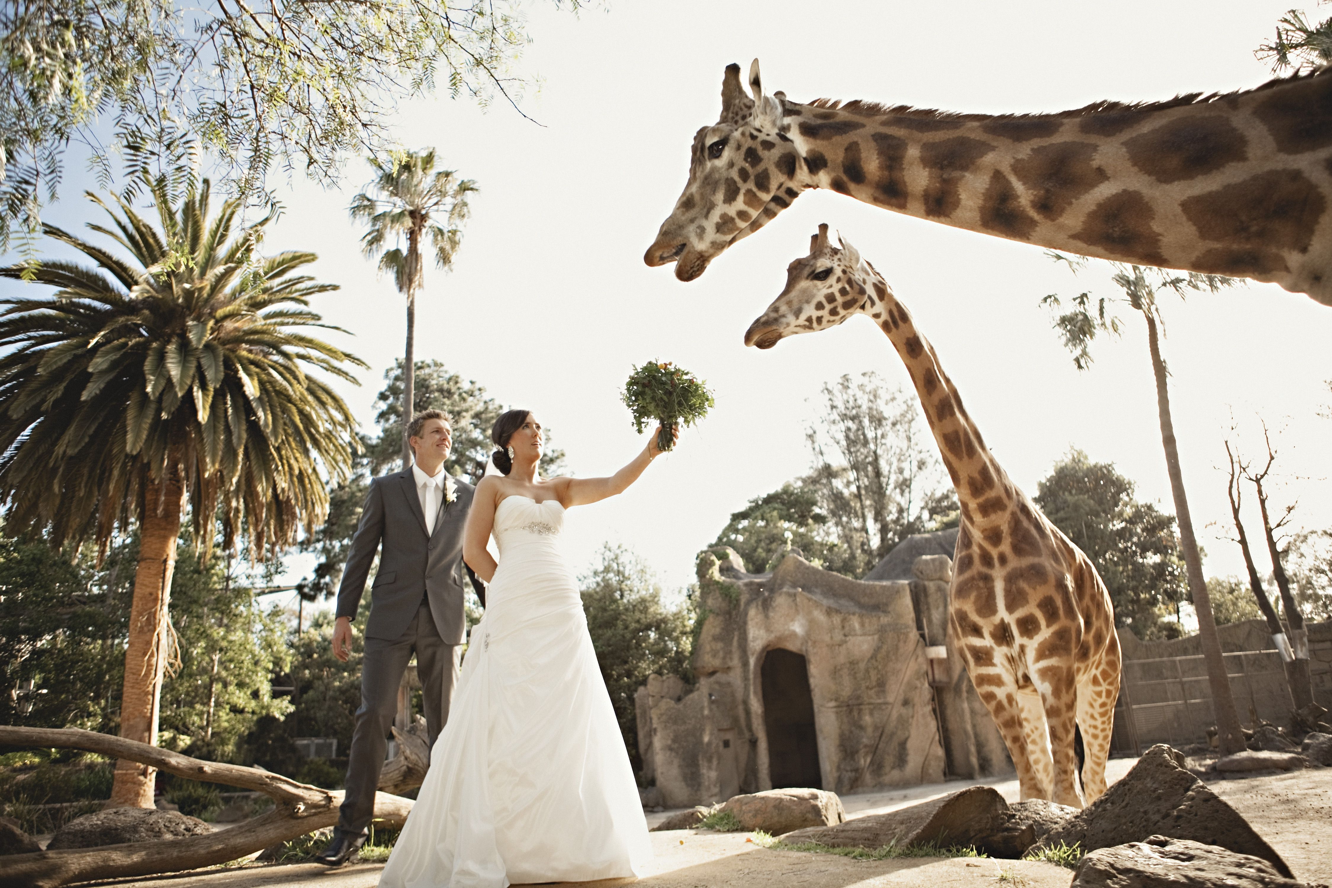 Zoo wedding this just seems like so much fun and laid back with no we are so blessed to have 3 awesome zoos in the melbourne area imagine getting married at one melbourne zoo weddings with the giraffe junglespirit Images
