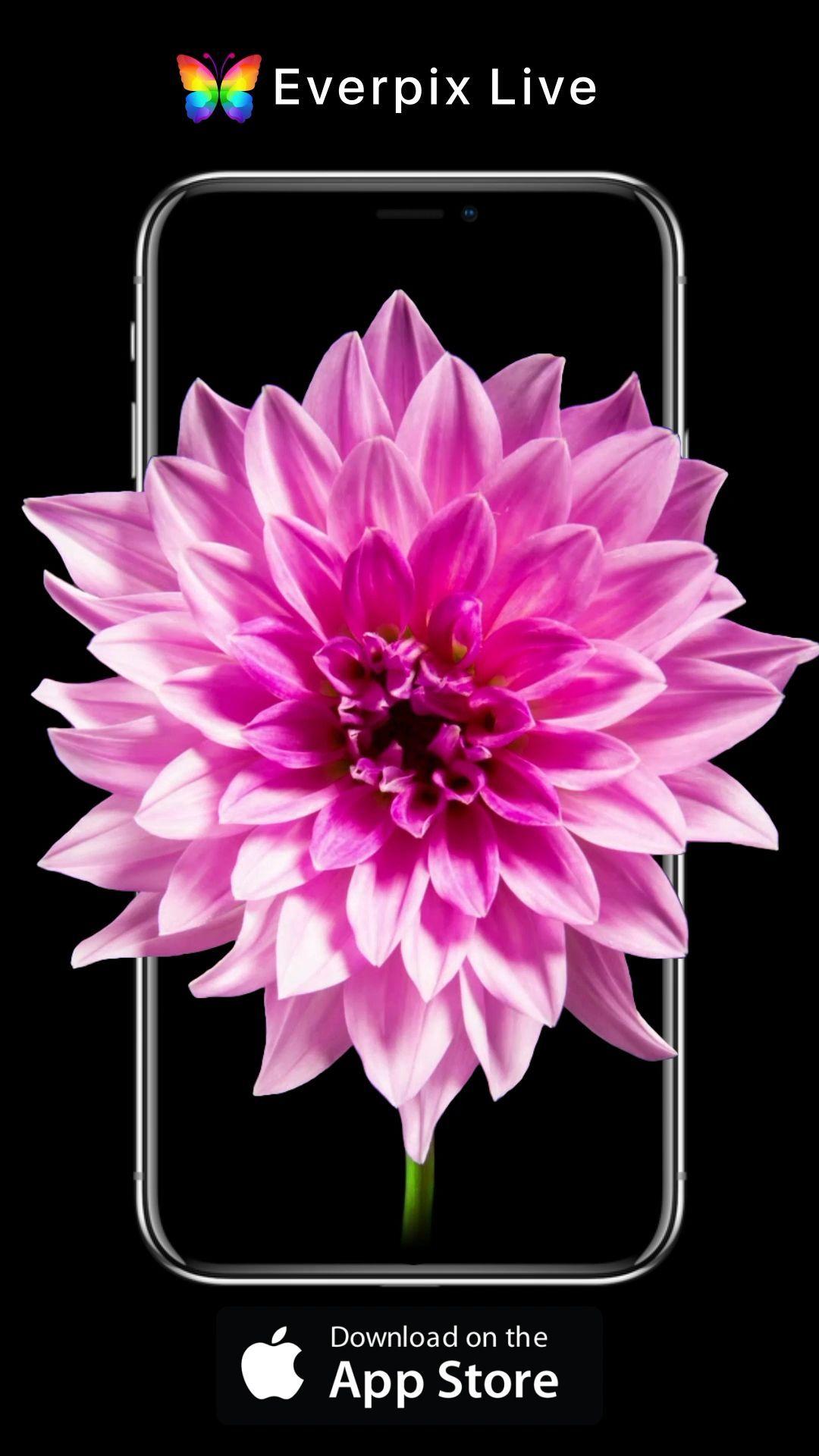 samsung wallpaper videos Hintergrundbild tapete Flowers