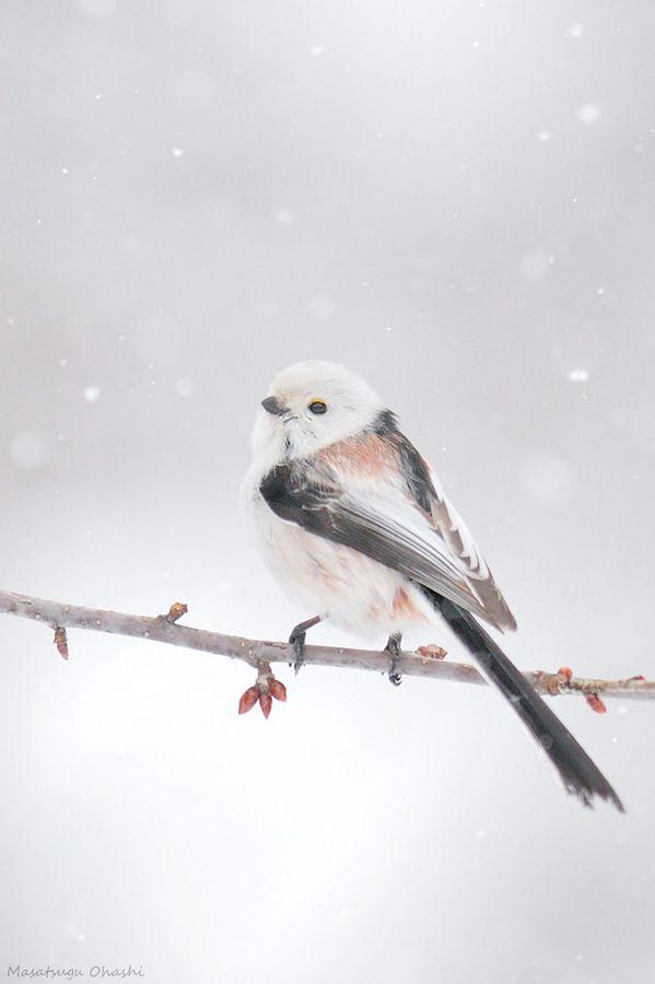 Bird inWinter #Snow / Uccello in inverno #Neve