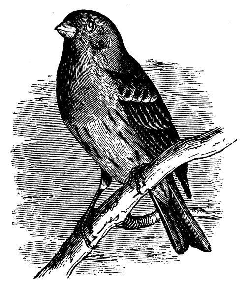 24 Free B W Vintage Bird Clip Art Clipart