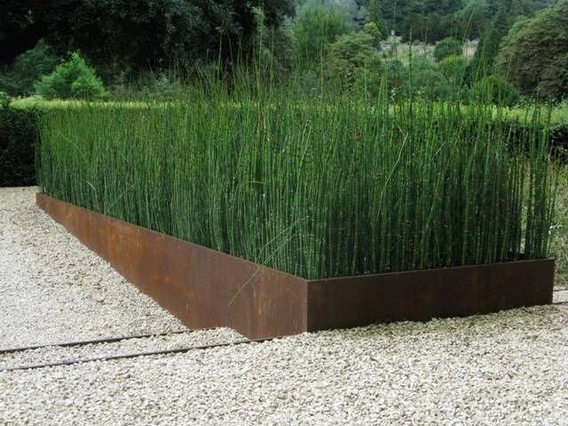 Equisetum Planting Google Search 610 Metal Planters