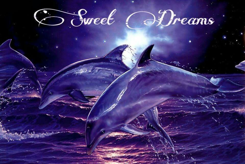 Pin by Tammy Sellers on goodnight wishes | Dolphins, Dolphin hd ...