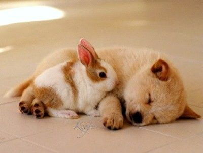 Cute puppy sleeping and bunny at its side. | Cute dog ...