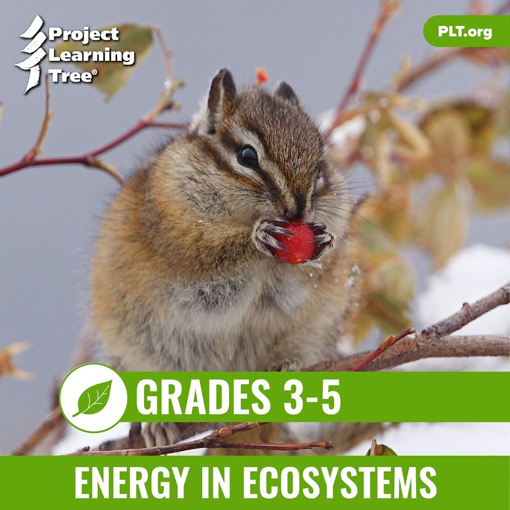 Energy In Ecosystems Cover