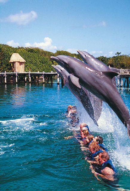 Swim with dolphins Xcaret