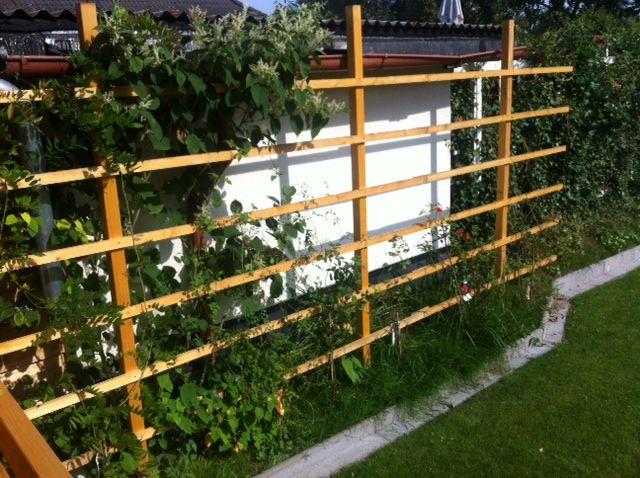 SichtschutzRankgitter aus Holz für den Garten selber