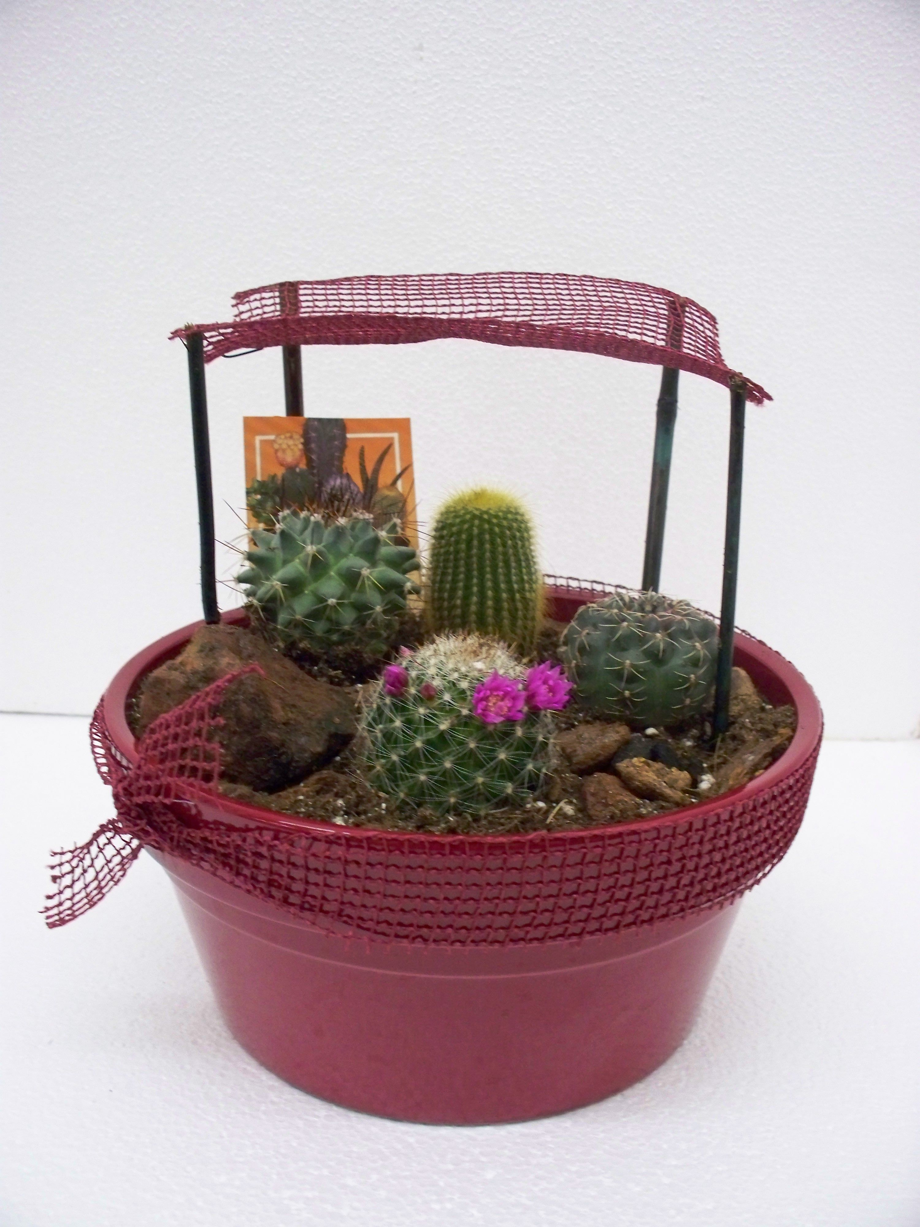 Marvelous Mini Cactus Gardens Are Adorable And Easy To Make, Brightening Up A Office  Desk Or