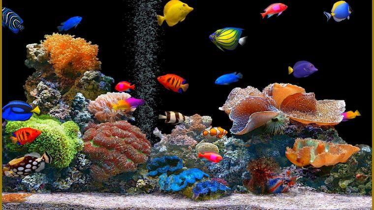 44 Free Desktop Wallpaper Windows 10 On Wallpapersafari In 2020 Uhd Wallpaper Fish Wallpaper Animal Wallpaper