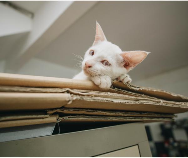 Cats Are Not Low Maintenance Cat Having Kittens Kittens Cutest