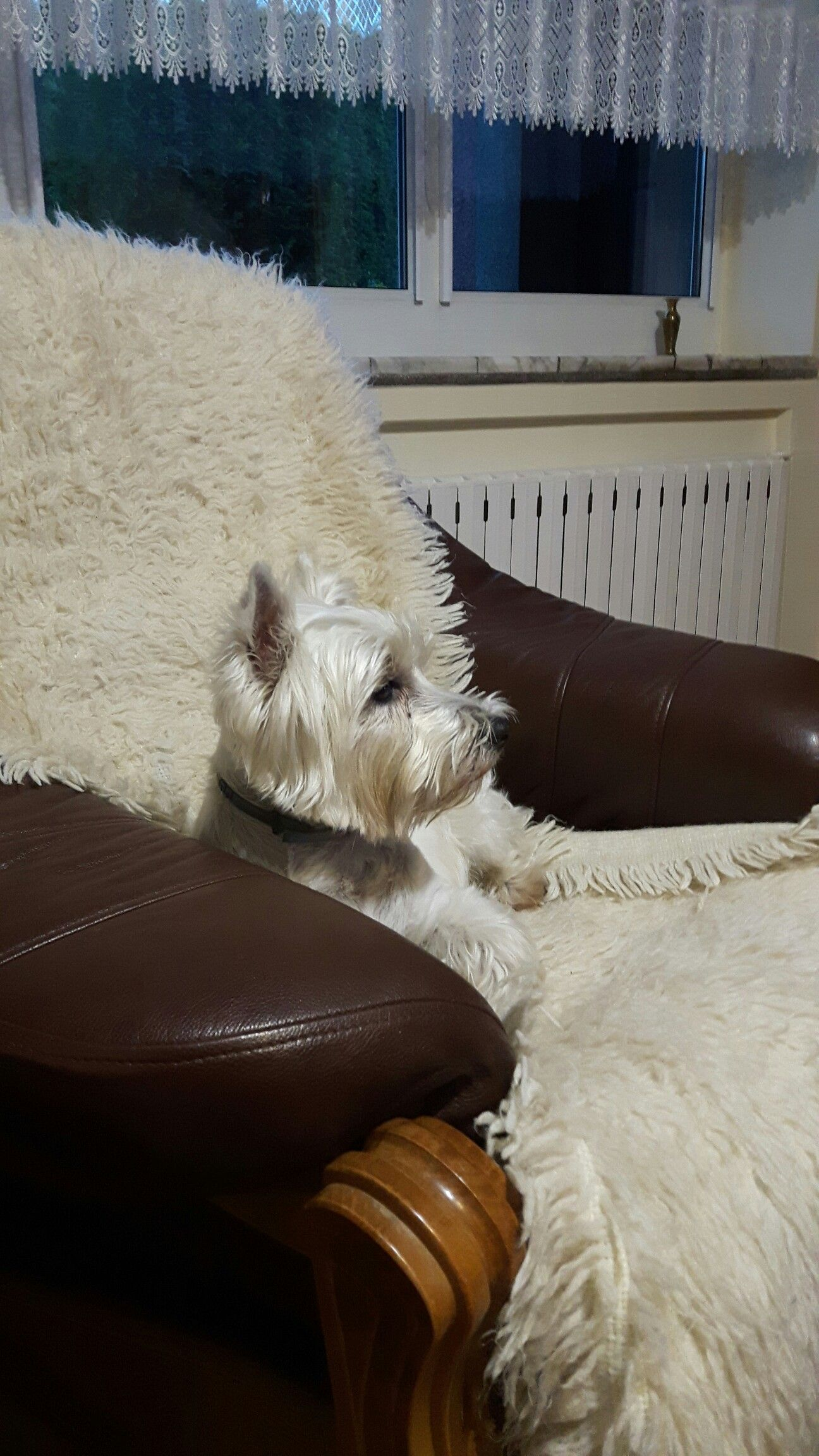 Pin By Aga On Westie Westies Moccasins Flats