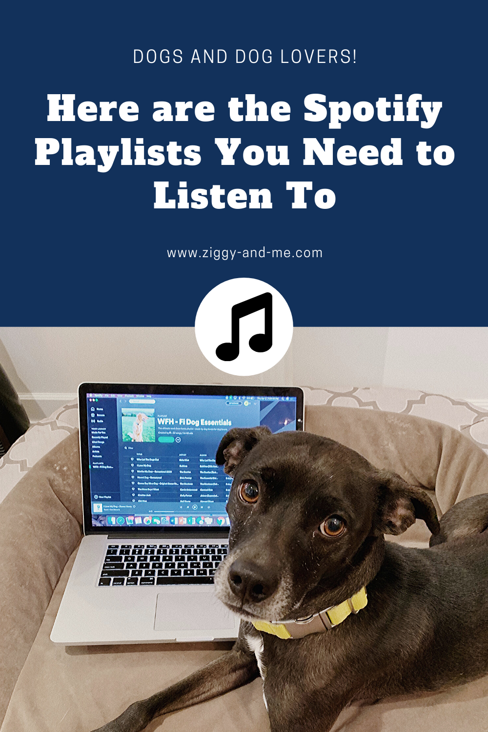 Best Spotify Playlists 2021 Here are the Best Dog Spotify Playlists You Need to Listen to NOW