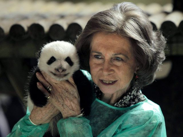 La Reina visita a los pequeños pandas de Zoolandia