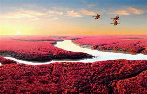 红海滩旅游_红海滩旅游攻略_红海滩旅游景点_乐途旅游网