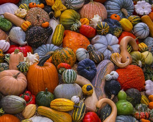 Autumn Harvest Jigsaw Puzzle, Halloween  Fall Jigsaw Puzzles