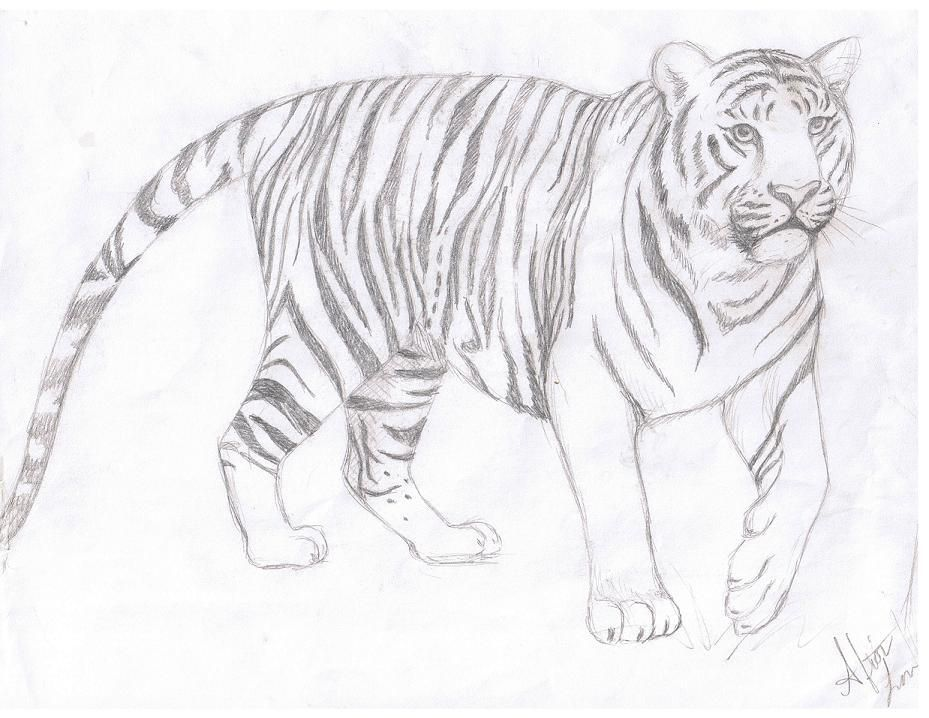 Art Of A Sad Tiger By Using Pencil