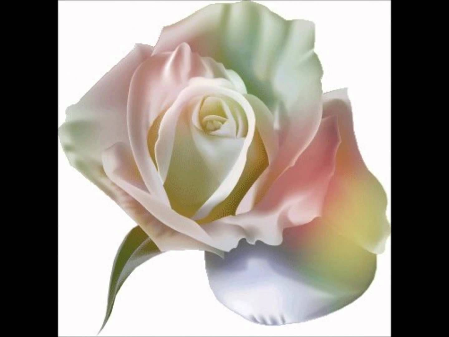 Les Roses Blanches Michele Torr Wmv Beautiful Flowers Flowers Beautiful Roses
