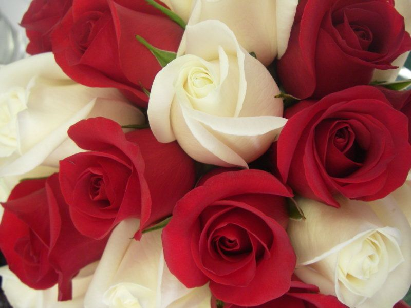 Red Roses With One White Rose Meaning And