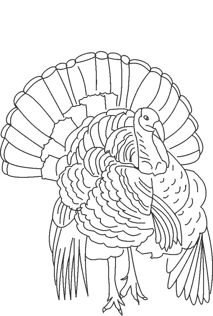 Coloring Book Pages Of Turkeys