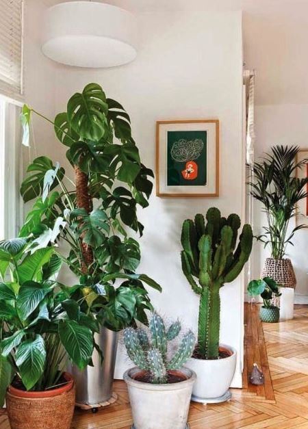 Plant Life: Enjoy Natural Outdoor Vibes Inside Your Home By Decorating With  Organic Based Materials.