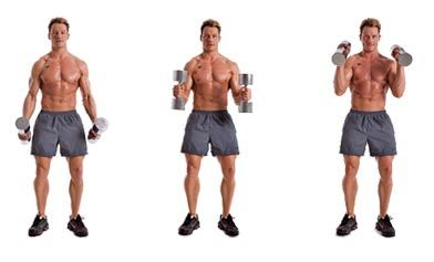 hammer curls Repetitions: 12,10, 8, 6, 12, 12 | Health & Fit ...