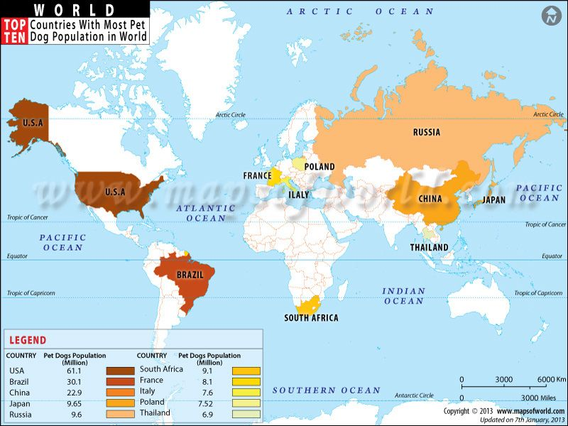 Top Ten Countries With Most Pet Dog Population world Top 10 theme - best of large printable world map pdf