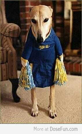 Cheerleader Funny Dog Pictures Dog Costumes Funny Dogs
