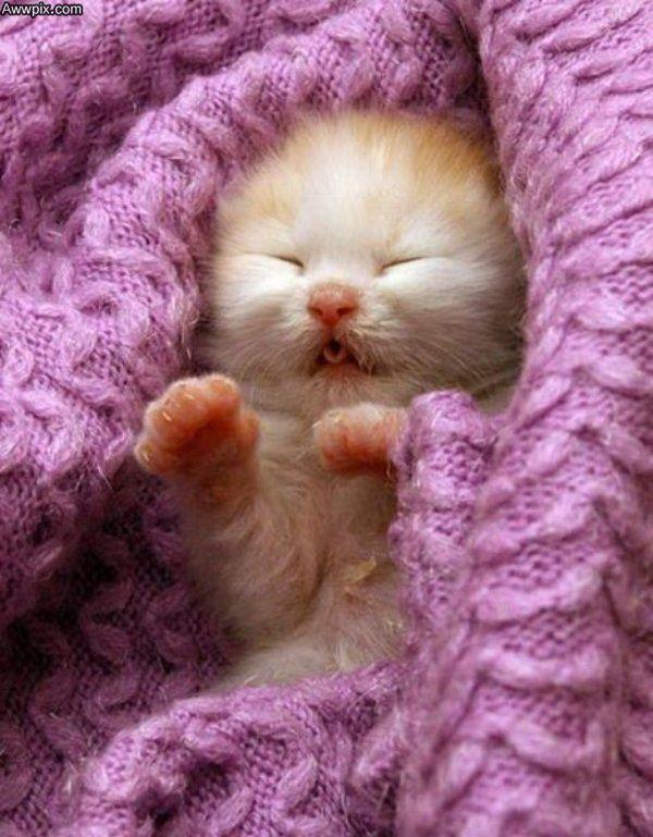 Too Cute Cats Cute Animals Kittens Cutest Newborn Kittens