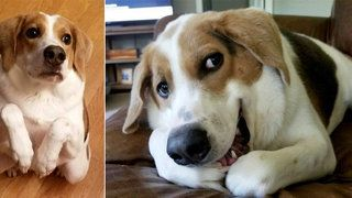 Family Dumps Loyal Dog At Shelter Because They Are Having A Baby #animalrescue