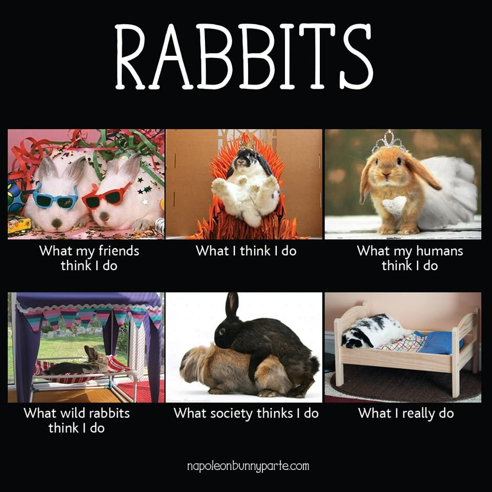 Funny rabbit funny rabbit pictures pictures of rabbits funny - Rabbit Ramblings Funny Bunny Memes