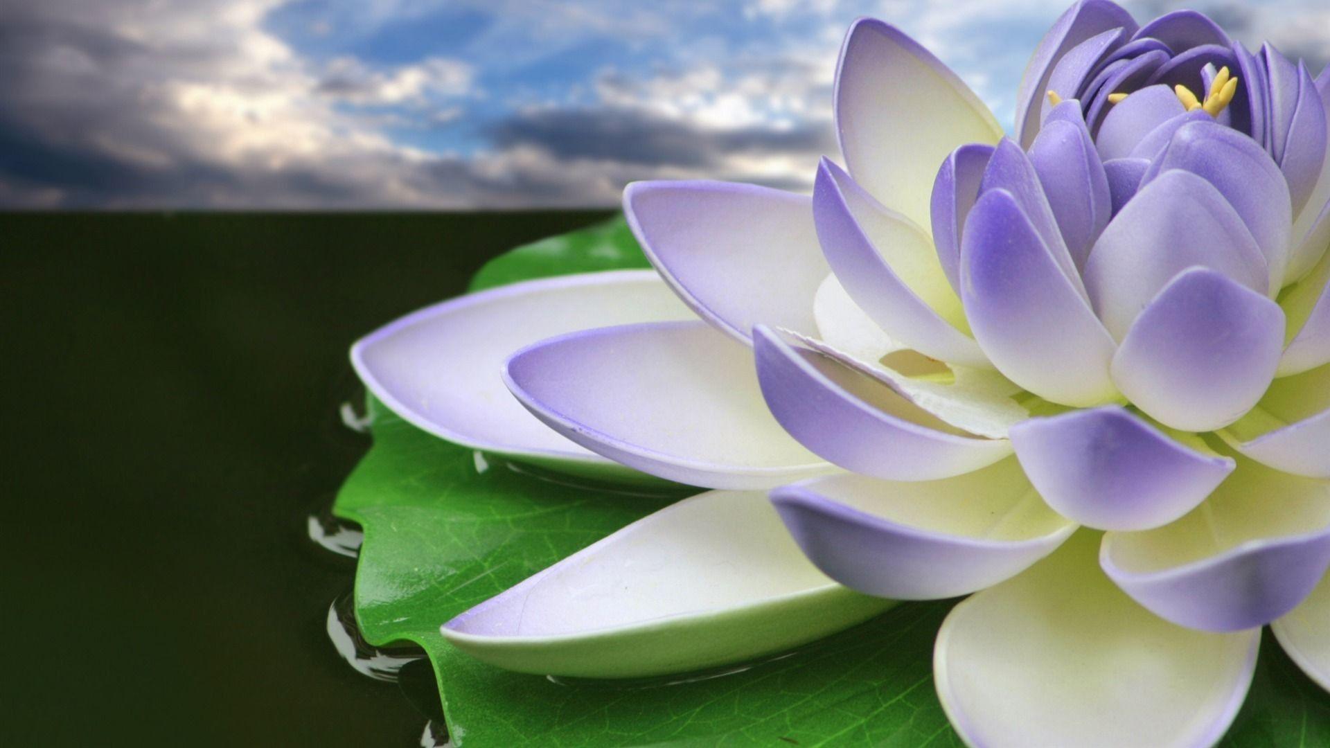 76 Lotus Flower Wallpapers on WallpaperPlay in 2020