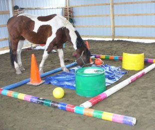 Marley's Mission has used horses to build a connection with child-abuse victims. (Special to Y! Sports)