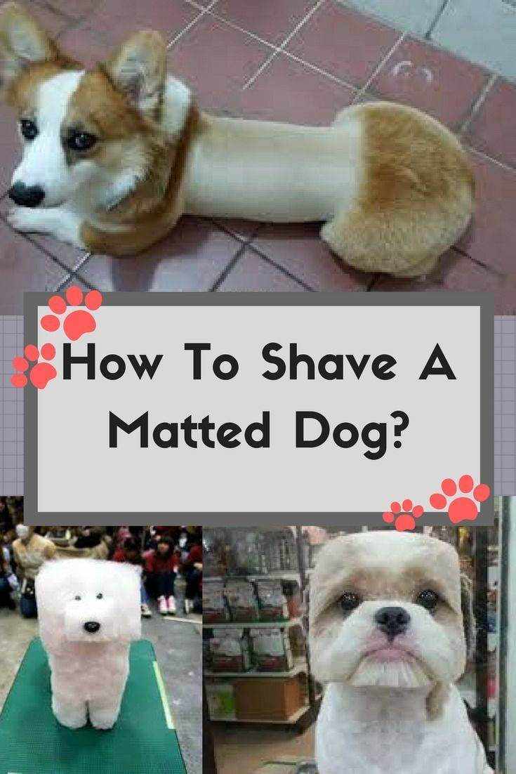 Quick Tips How To Shave A Matted Dog At Home Matted Dog Hair Dogs Dog Business
