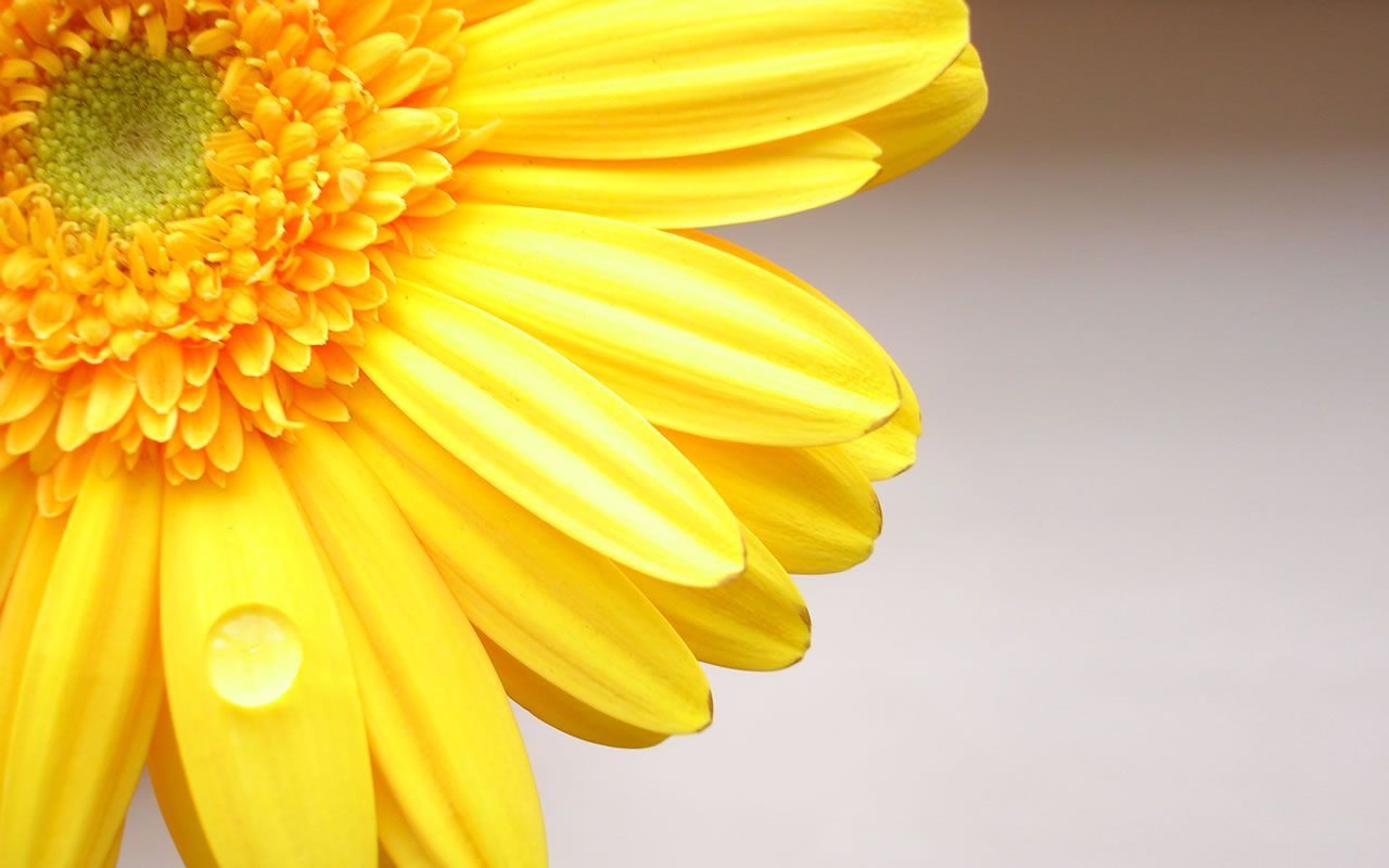 Flower おしゃれまとめの人気アイデア Pinterest Naomi ガーベラ