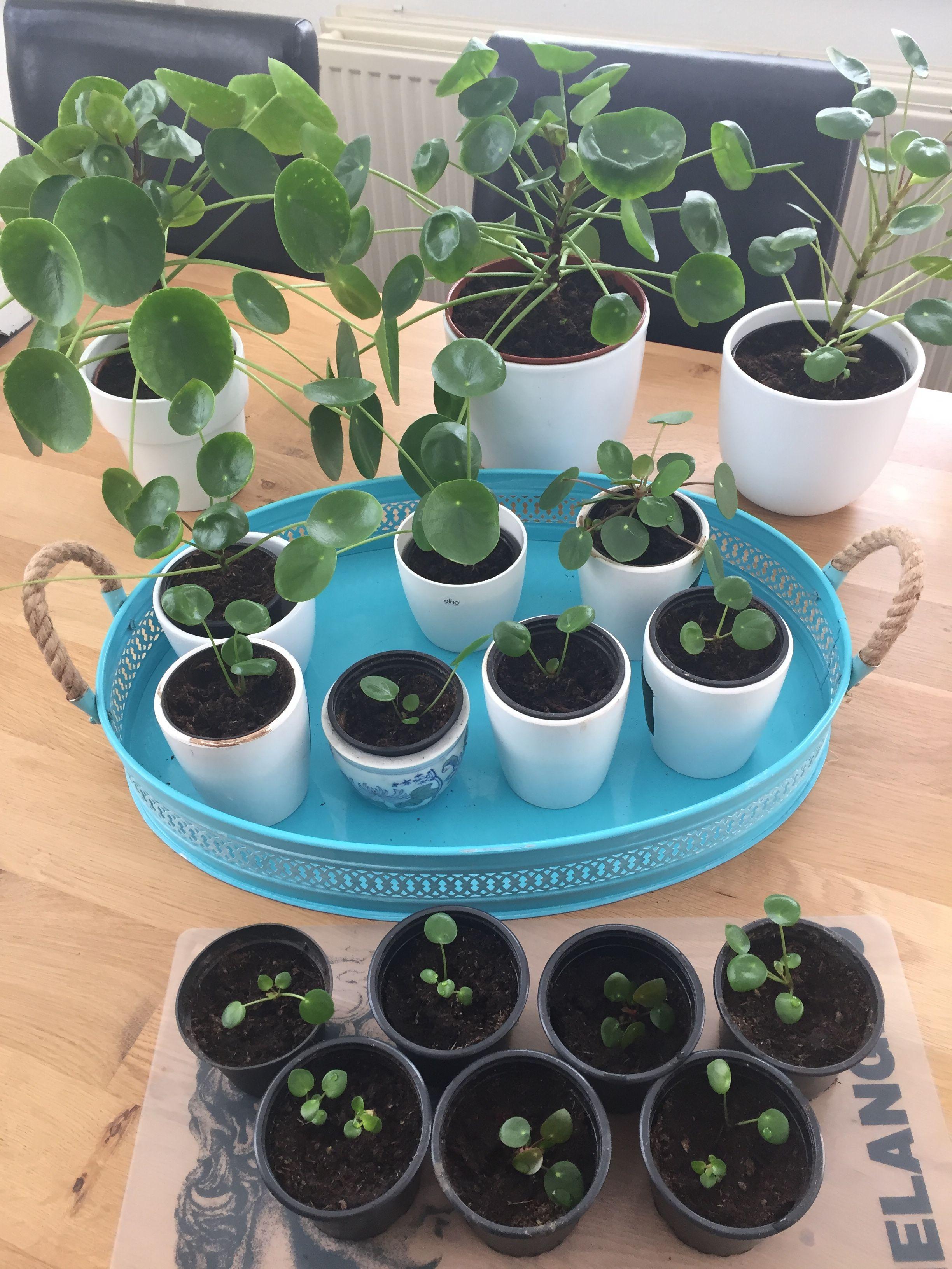 Pin On Indoors: Inside Plants, Indoor Plants, Plants